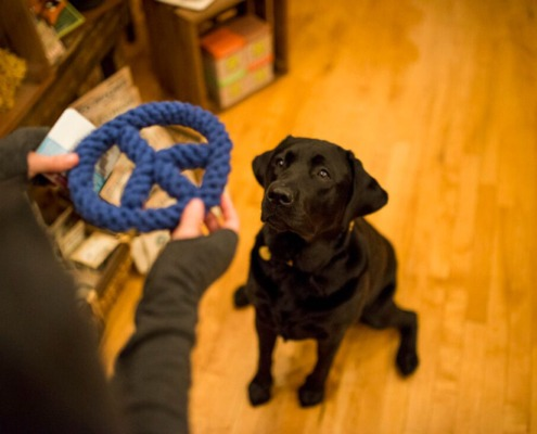 A black lab about to get a toy from our pet friendly store in Seacoast NH