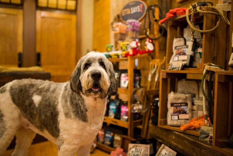 A big dog hanging out in our pet friendly shop in Portsmouth NH